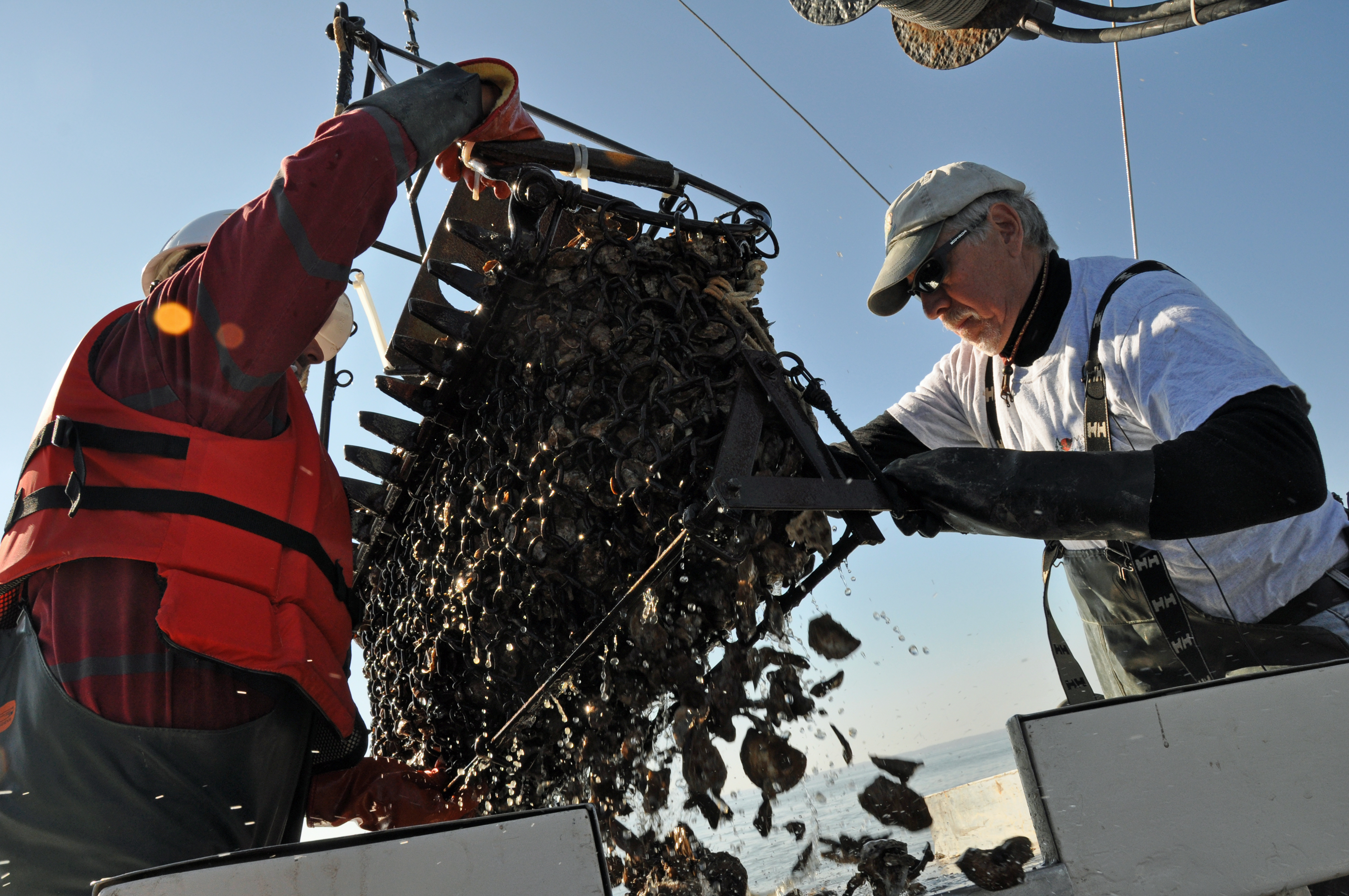 Chesapeake Bay oyster survey, photo by multimedia journalist and environment reporter Pamela Wood.
