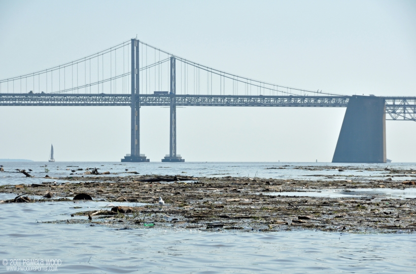 Debris near the Chesapeake Bay Bridge, photo by multimedia journalist and environment reporter Pamela Wood.